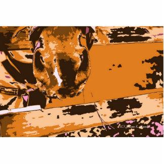 bozal del caballo con el gráfico del marrón de la  esculturas fotograficas