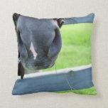 bozal del caballo con la cerca del heno almohadas