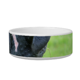 bozal del caballo con la cerca del heno bol para gato