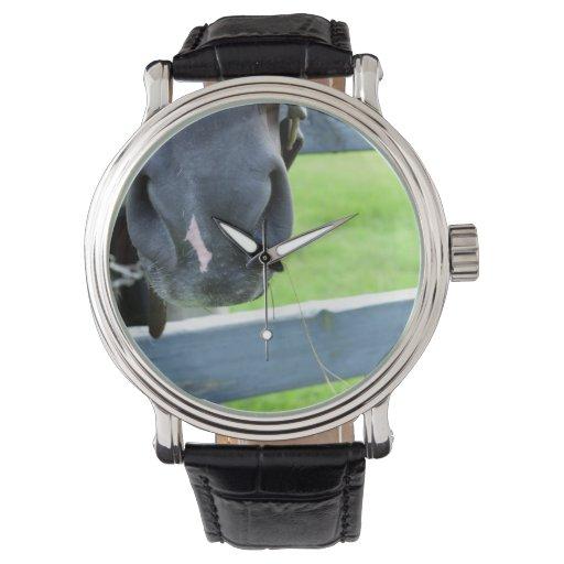 bozal del caballo con la cerca del heno relojes