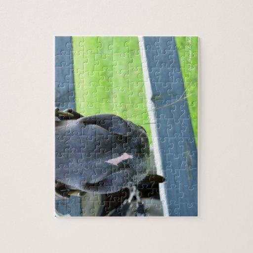 bozal del caballo con la cerca del heno rompecabezas con fotos