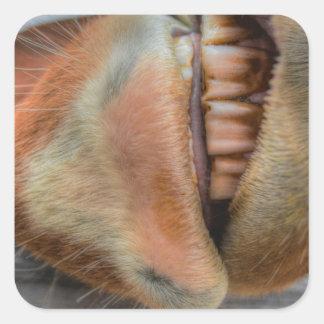 Bozal y dientes amistosos divertidos del caballo pegatina cuadrada
