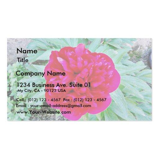 Bozur Business Card
