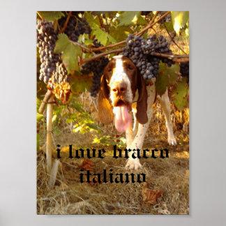 bracco italiano poster