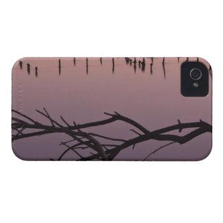 Braches en el puerto, playa de estado del carcasa para iPhone 4 de Case-Mate