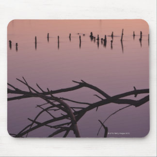 Braches in harbor, Moss Landing State Beach, Mouse Pad