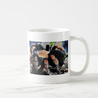 Brachypelma boehmei coffee mug