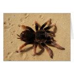 Brachypelma tarantula spider in sand greeting card