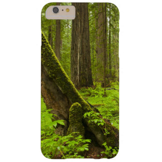 Bracken fern and redwood sorrel barely there iPhone 6 plus case