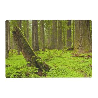 Bracken fern and redwood sorrel laminated placemat