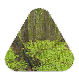 Bracken fern and redwood sorrel speaker