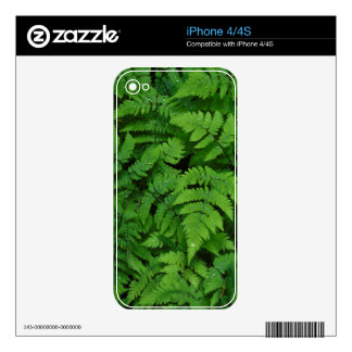 Bracken fern with rain drops, Washington State Decals For iPhone 4