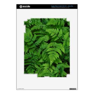 Bracken fern with rain drops, Washington State iPad 3 Skin
