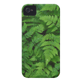 Bracken fern with rain drops, Washington State iPhone 4 Case-Mate Cases