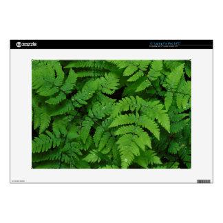 "Bracken fern with rain drops, Washington State Skins For 15"" Laptops"