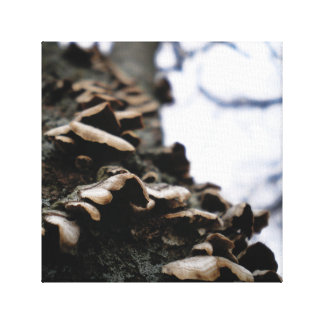 Bracket Fungus Canvas Print