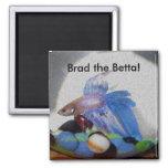 Brad the Betta! 2 Inch Square Magnet