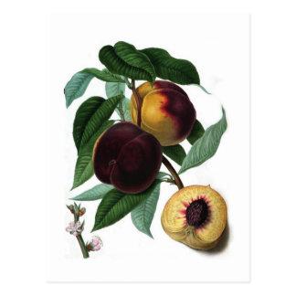 Braddick's American Peach Postcard