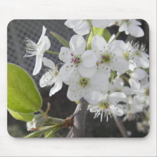 Bradford Pear 2 Mouse Pads