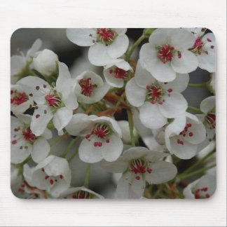 Bradford Pear Blooms Mousepad