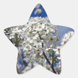 Bradford Pear Blooms Star Sticker