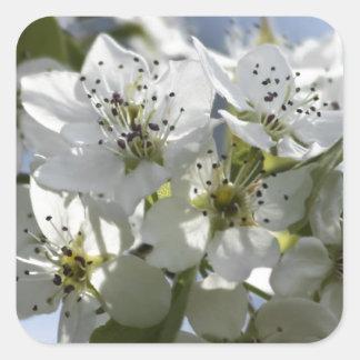 Bradford Pear Blossom Square Sticker