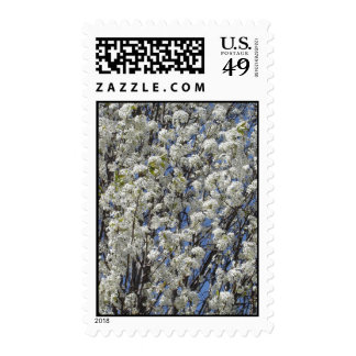 Bradford Pear Blossoms Postage Stamp