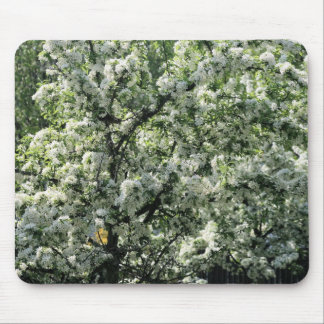 bradford pear mouse pads