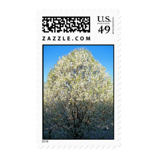 Bradford Pear Tree Stamps