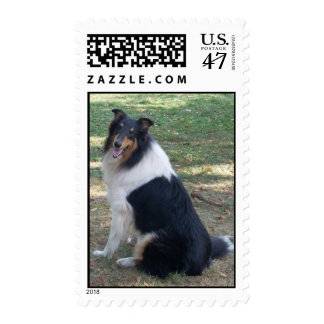 Braedyn Breeze: A COLLIE Postage