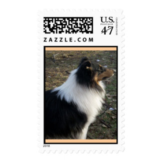 Braedyn -rough tricolor Collie Stamp