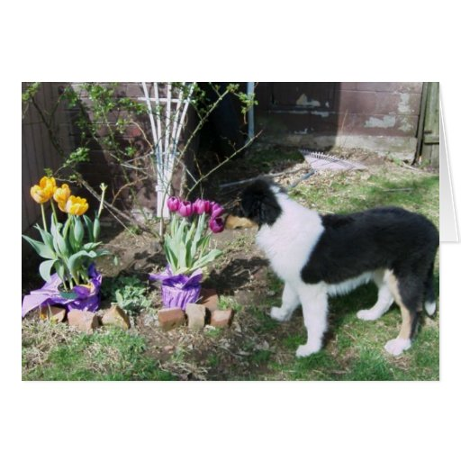 Braedyn smells the flowers card