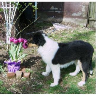 Braedyn smells the flowers (PHOTOSCULPTURE) Cutout