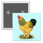 Brahma:  Buff Rooster Pinback Button