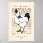 Brahma Chicken Country Kitchen Vintage Decor Poster