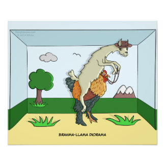 Brahma-Llama Diorama Photo Print
