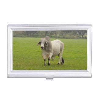 Brahman (aka. Brahma) Bull en campo Cajas De Tarjetas De Visita