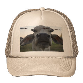 BRAHMAN BULL IN RURAL AUSTRALIA TRUCKER HAT