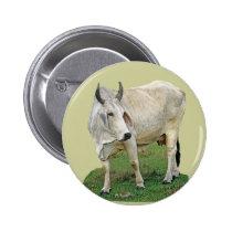 Brahman Cattle Pinback Button