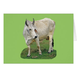 Brahman Cow Card