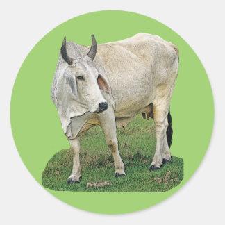 Brahman Cow Classic Round Sticker