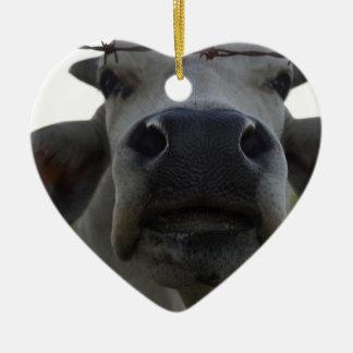 BRAHMAN COW STEER RURAL QUEENSLAND AUSTRALIA CERAMIC ORNAMENT