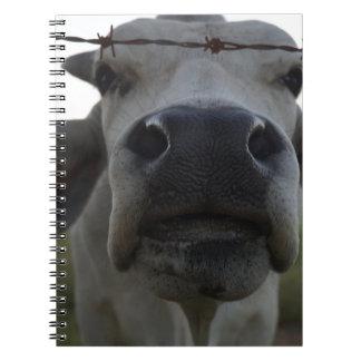 BRAHMAN COW STEER RURAL QUEENSLAND AUSTRALIA SPIRAL NOTEBOOKS