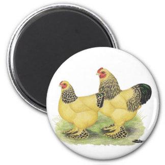 Brahmas:  Buff Bantams 2 Inch Round Magnet