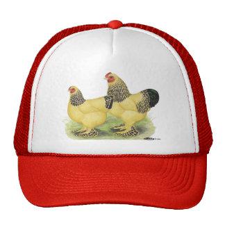 Brahmas:  Buff Bantams Mesh Hat