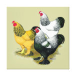 Brahmas Three Roosters Gallery Wrap Canvas