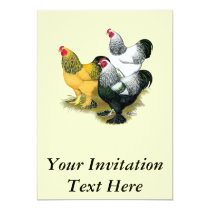 Brahmas Three Roosters Invitation