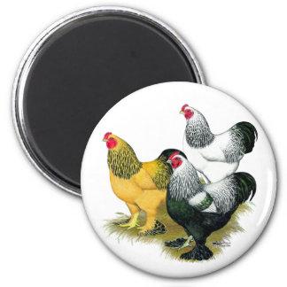 Brahmas Three Roosters Magnet
