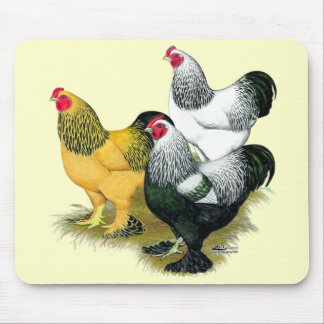 Brahmas Three Roosters Mouse Pad