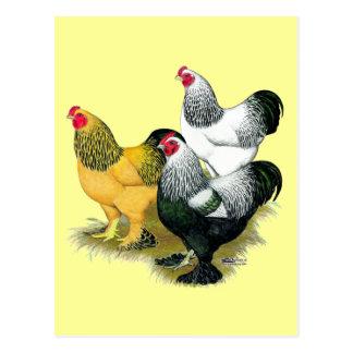 Brahmas Three Roosters Postcard